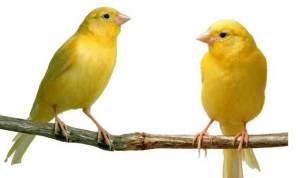 5 Kicauan Burung Termahal Di Indonesia Bimbim Blitar