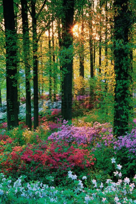 flower-forest-botanical-garden-barbados-001-tantri-setyorini