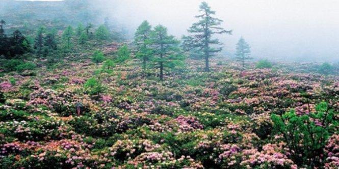 hutan-gunung-salju-baima-china