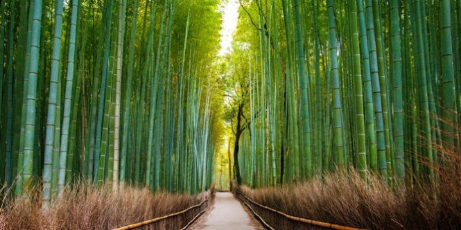 hutan-sagano-jepang
