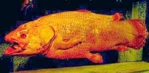 Ikan Kuno