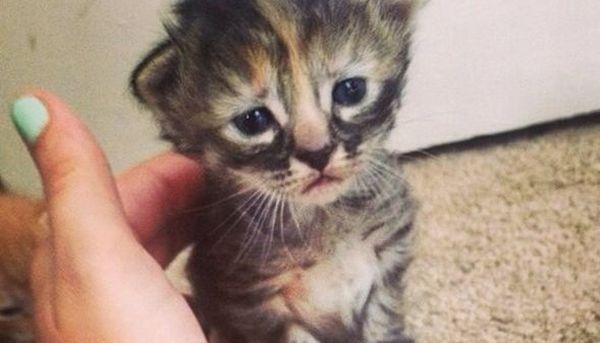 kucing paling sedih didunia