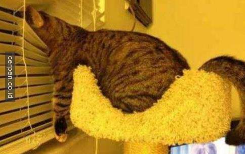 Kucing Lucu 1