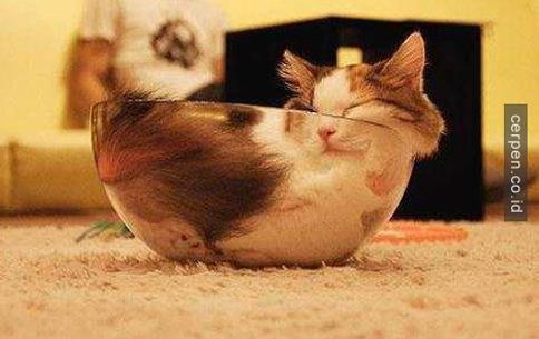 Kucing Lucu 10
