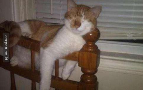 Kucing Lucu 11