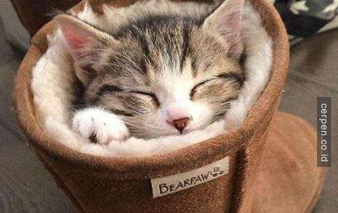 Kucing Lucu 13