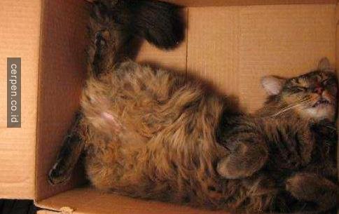 Kucing Lucu 15
