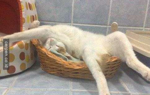 Kucing Lucu 6