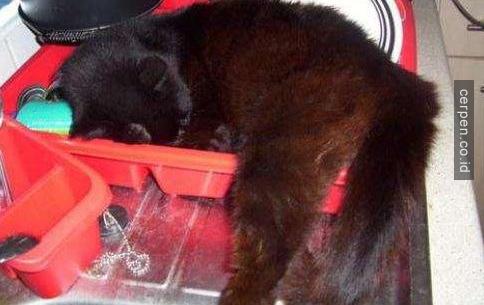 Kucing Lucu 9