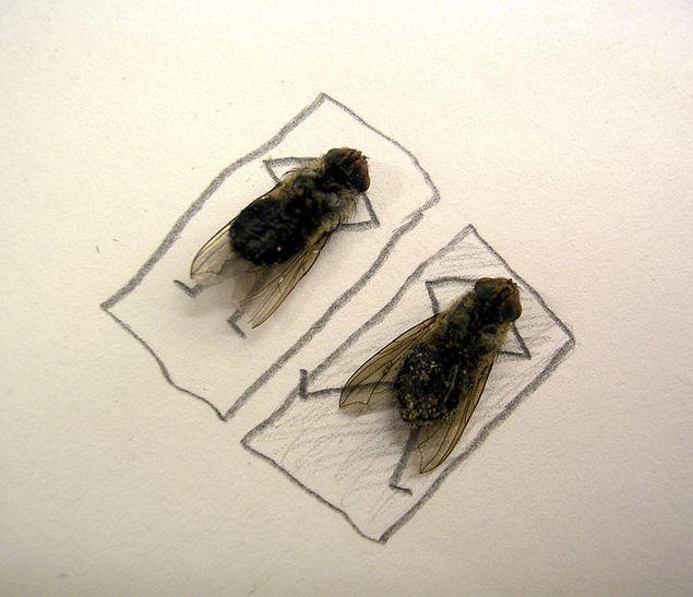 serangga-lucu berjemur