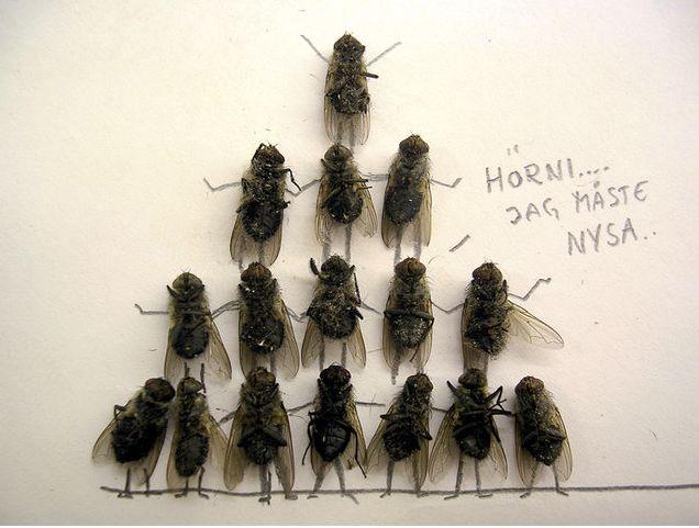 serangga-lucu cher leader