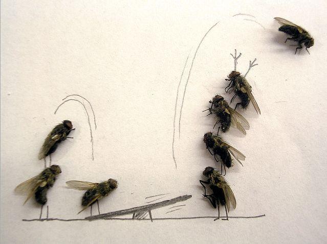 serangga-lucu jungkitan