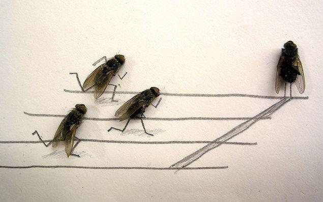 serangga-lucu lari