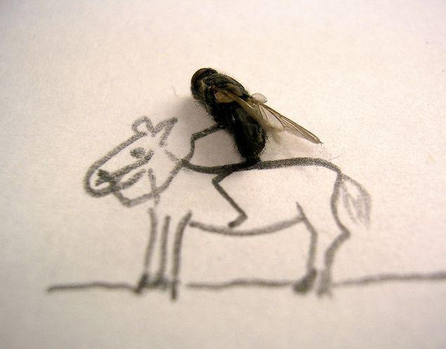 serangga-lucu naik kuda
