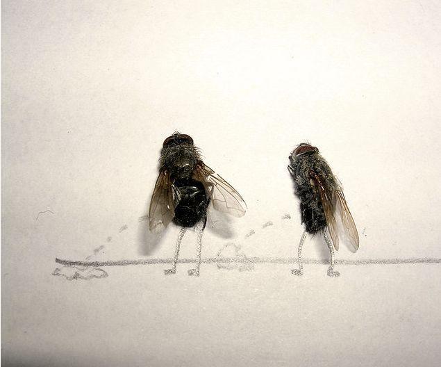 serangga-lucu pipis