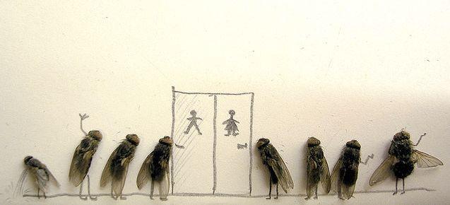 serangga-lucu toilet